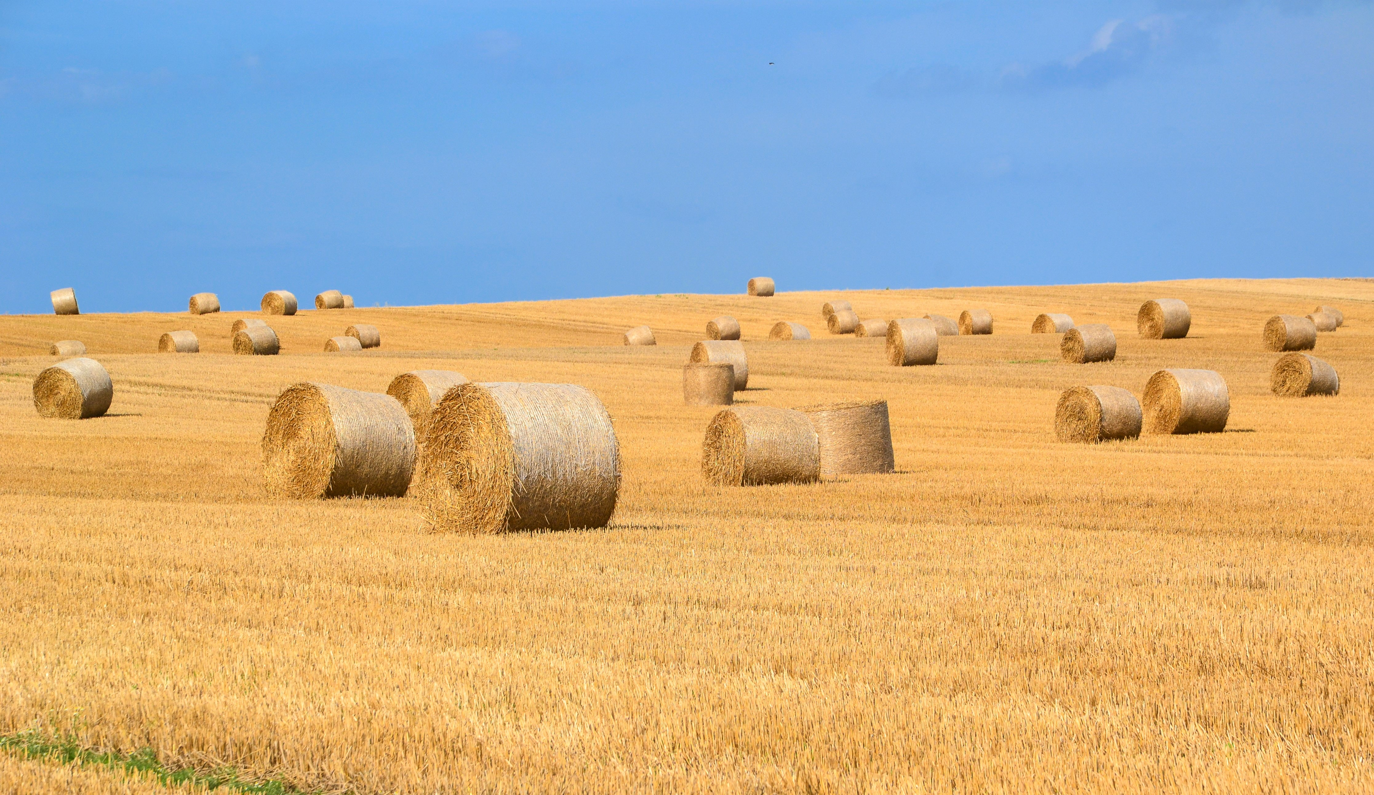 agriculture-arable-bale-countryside-289334